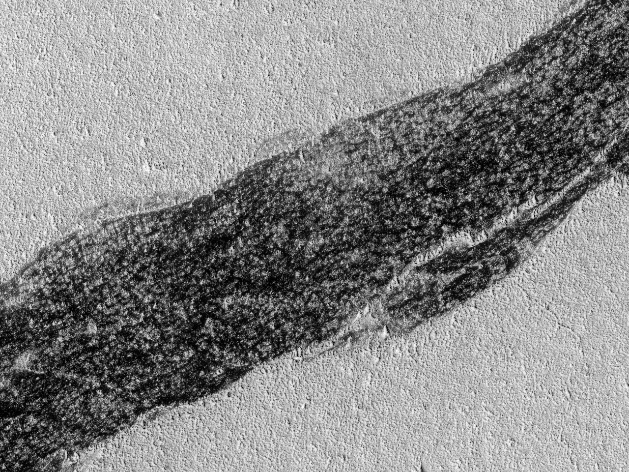 Скалистое обнажение на равнине Amazonis Planitia