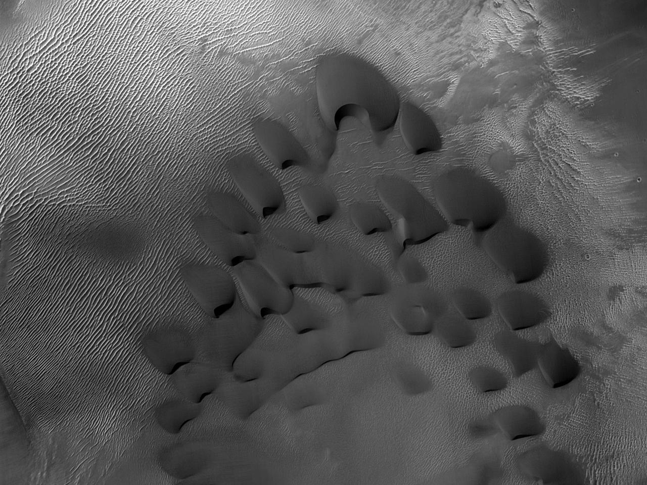 Dune all