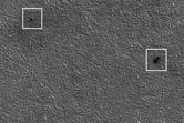 Phoenix Lander Hardware: EDL +11
