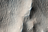Abundant Linear Gullies in Terrains West of Arsia Mons