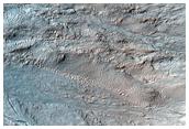 Gullies in Newton Crater