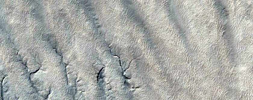 A Forest of Channels on the South Polar Layered Deposits