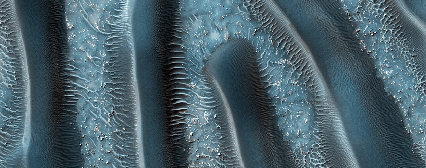 Le mille-pattes de Mars?