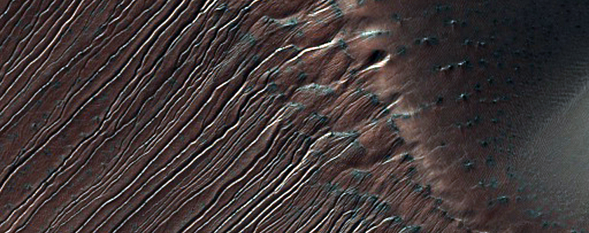 Gullies on Very High Dune Slip Face in Russell Crater