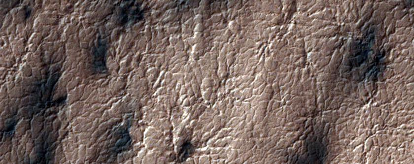 Araneiform and Lace Terrains