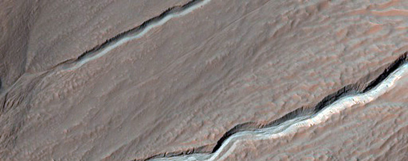 Light-Toned Gully Materials on Hale Crater Wall