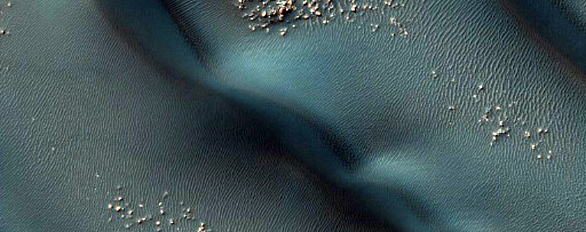 Transverse and Barchan Dune Field