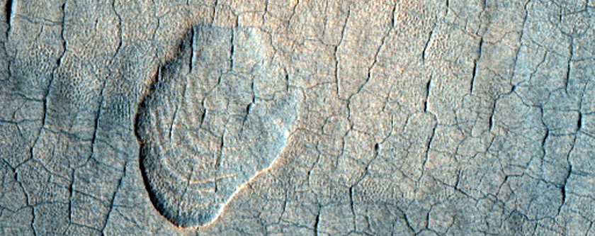Polygon Network and Scalloped Depressions in Western Utopia Planitia