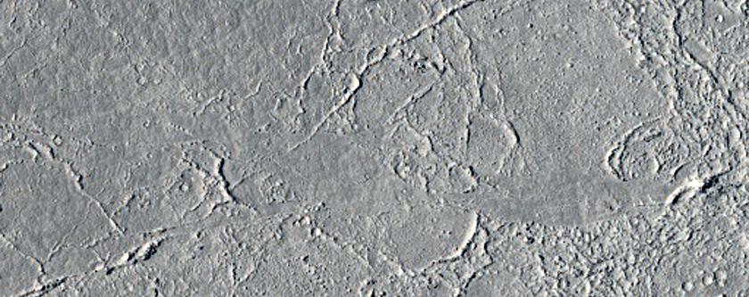 Contact in Elysium Planitia