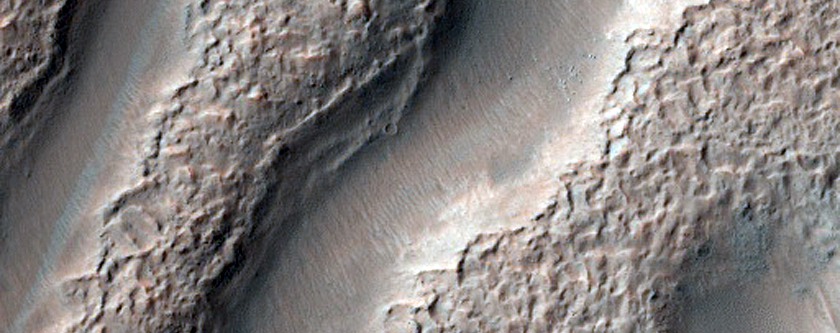 Branched Valleys in Newton Crater