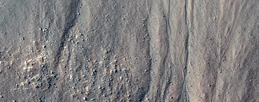 Gullies in Western Nereidum Montes