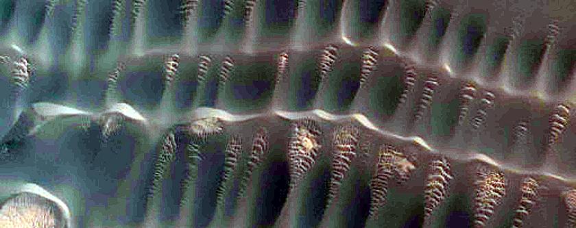 Dunes Far North with Seasonal Spots