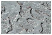 Monitoring of South Polar Residual Cap Albedo Features