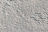 Ground-Ice Features in Tempe Terra