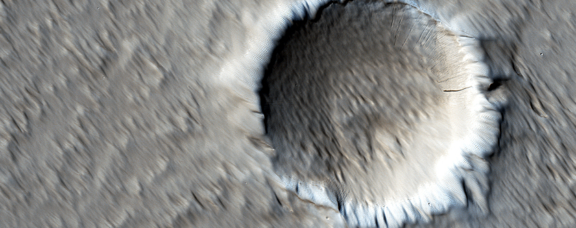 The Wind-Scoured Lava Flows of Pavonis Mons