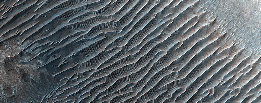 Dune Ripples in Her Desher Vallis
