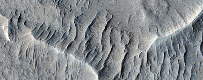 Wrinkle Ridges and Knobs in Schiaparelli Crater