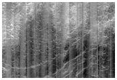 Layers in Scalloped Terrain in Utopia Planitia