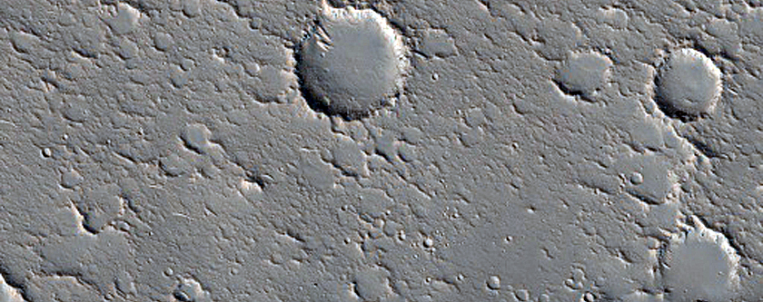 Dendritic Ridges in Channel Levees