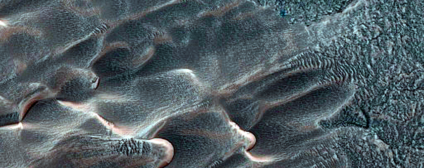 Dunes Dubbed Buzzel