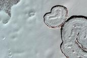 Monitoring of South Polar Residual Cap