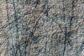 Scalloped Depressions in Amphitrites Patera