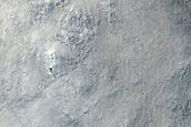 Nilosyrtis Region
