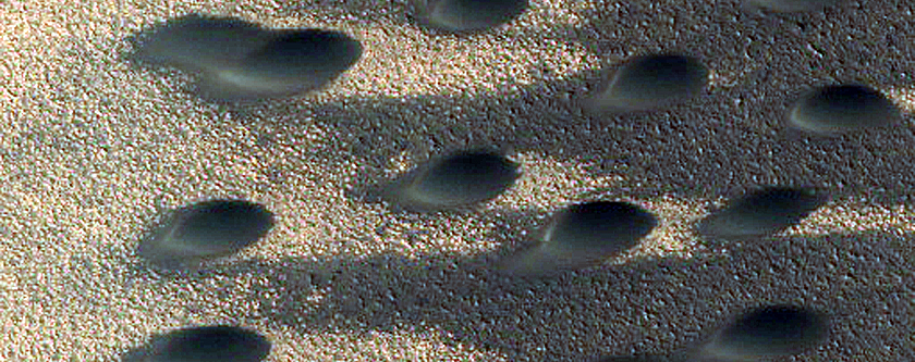 North Polar Dune Forms and Frost