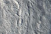 Cross-Cutting Sinuous Ridges in Tempe Terra