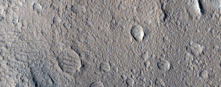 Candidate New Impact in Olympus Mons Aureole