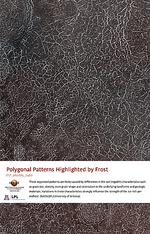 Polygonal Patterns Highlighted by Frost
